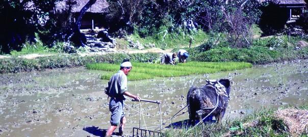 162 農作業の様子。田んぼにて
