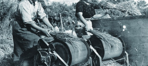 161 脱穀機を使う女性