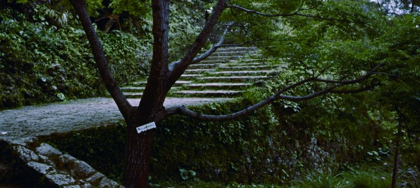 67 中城城跡 南の郭に続く階段