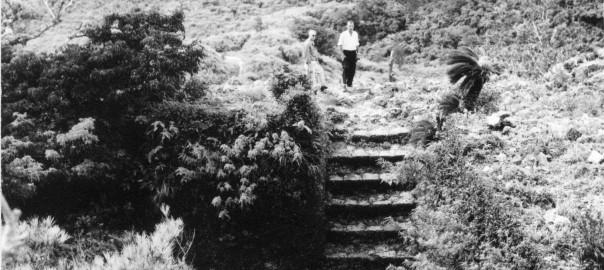 92 中城城跡 裏門から撮影か?