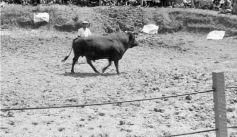㉔aaa094-Nakagusuku-bull-fights-52クレジット入り